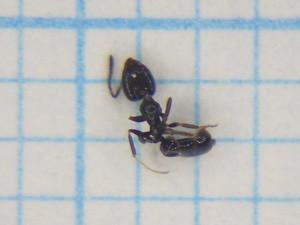 Ant104