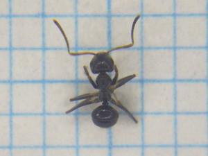 Ant106