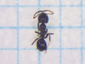 Ant108