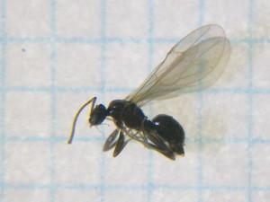 Ant112