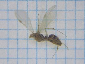 Ant114
