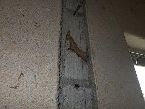 浴室壁面の柱撤去部分蟻道跡