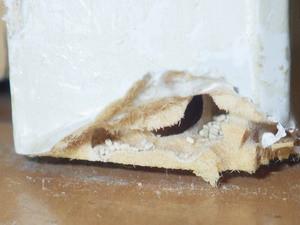 被害材内部で確認されたアメリカカンザイシロアリの糞