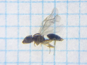 浴室で発生した羽アリ