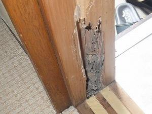 玄関上がり框付近柱で確認されたシロアリ被害