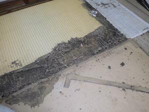 荷物の移動で確認されたシロアリ被害