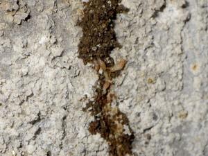 新たな蟻道構築