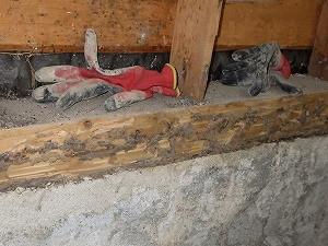 浴室壁内の土台で確認されたシロアリ被害