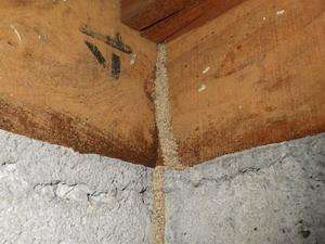 浴室とは異なる場所で確認された蟻道