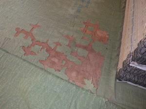 畳の下で確認されたシロアリ被害