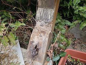 ウッドデッキで確認されたシロアリ被害