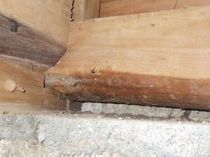 薬剤穿孔注入跡付近で確認された蟻道