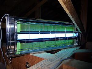 ライトトラップによるアフリカヒラタキクイムシのモニタリング