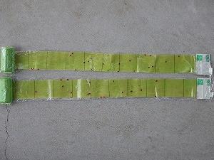 補虫紙捕獲数計測