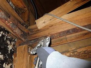 天井点検口からの薬剤処理