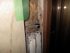 壁の中のシロアリ被害