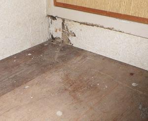 床板で確認されたシロアリ被害