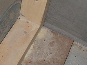 減少した木粉と死骸