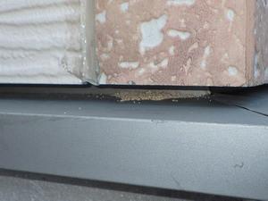 サイディングと水切板の隙間に堆積するアメリカカンザイシロアリの糞