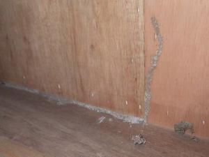 押入の奥で確認された蟻道