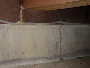 土間コンクリート床下で確認された蟻道