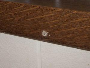 キッチンカウンターから噴出する蟻土