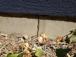 屋外基礎面に構築された蟻道