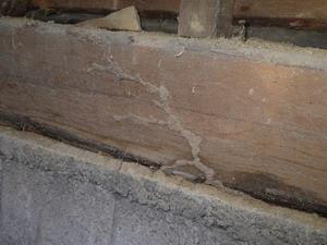 土台で確認された蟻道と被害