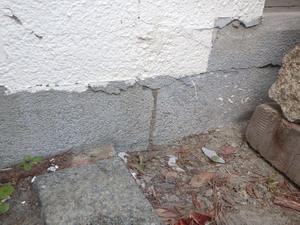 屋外に形成された蟻道