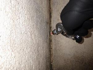 表面の蟻道はカモフラージュです