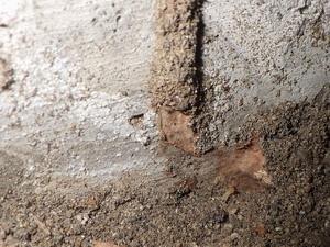 再生された蟻道