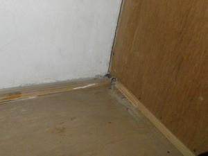 押入の奥で確認されたシロアリ被害