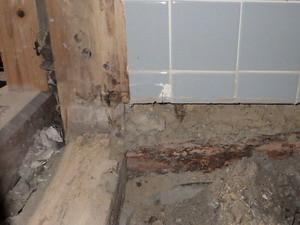 解体したトイレの土台で確認されたシロアリ被害