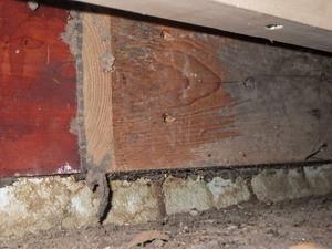 土間コンクリートは容易にシロアリが侵入します