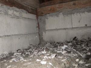 シロアリ調査で確認された鳥の羽