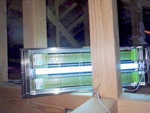 アフリカヒラタキクイムシ未捕獲を確認したライトトラップ