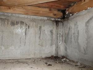 シロアリ調査で確認された雨漏れ