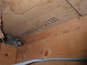 床下で確認されたゴキブリの糞