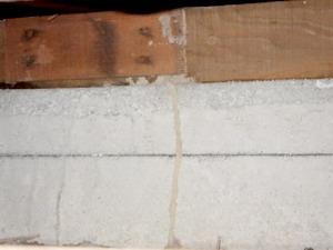 土間コンクリートで確認された蟻道