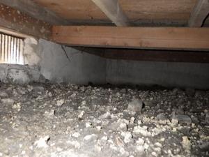 屋外にシロアリが生息していても、床下にいないケースはあります