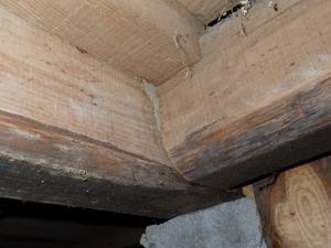 玄関上り框付近床組みで確認された蟻道
