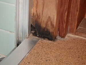 浴室入口枠で発生した羽アリ