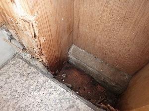 勝手口入口枠で確認された羽アリ