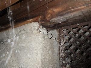 床下換気口付近の蟻道