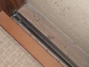 和室で確認された羽アリが落とした翅