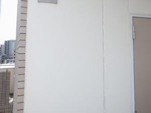ユスリカが大量に集まった壁