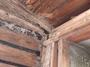雨漏れに伴うシロアリ被害