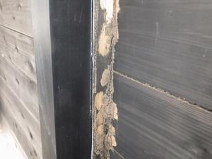 外壁のシロアリ被害