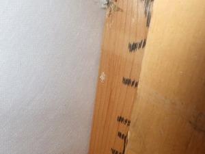 間柱で確認されたアメリカカンザイシロアリ糞排出孔