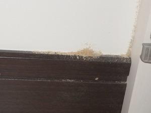 壁面に堆積する木粉